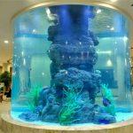 kristal fiskur tankur
