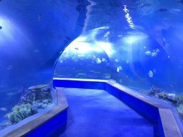 gagnsæ acryl gler Tunnel fiskabúr